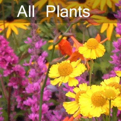 All Plants