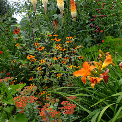 Hot Garden - Rudbeckia 'Prarie Glow', Kniphofia 'Painted Lady', Hemerocallis 'Mauna Loa', Achillea 'Walther Funcke'