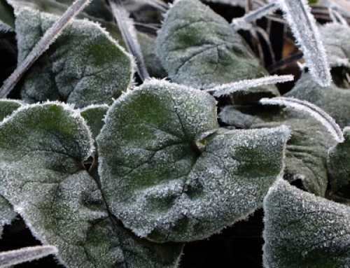 Delicate Patterns in the Frost