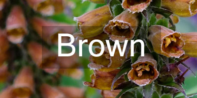 Colours-Brown
