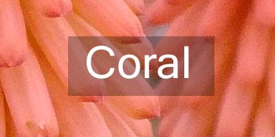 Colours-Coral
