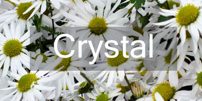 Colours-Crystal