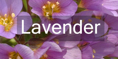 Colours-Lavender