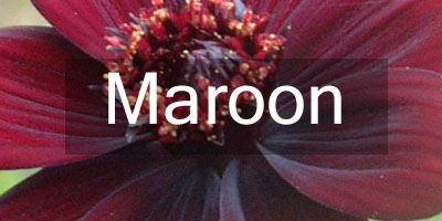 Colours-Maroon