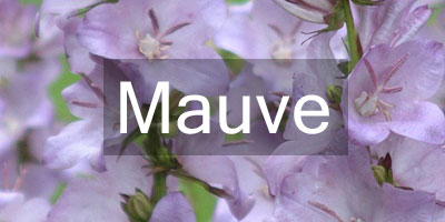 Colours-Mauve