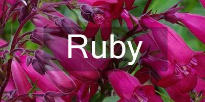 Colours-Ruby