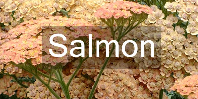 Colours-Salmon