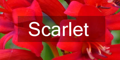Colours-Scarlet