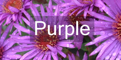Colours-Purple2
