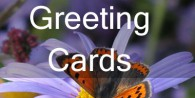 greeting-cardsf