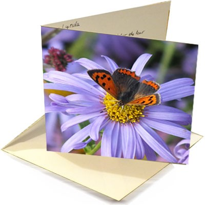 Gift card greetings card dorset perennials hepatica m4hsunfo