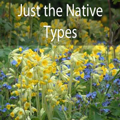 Just the Native types