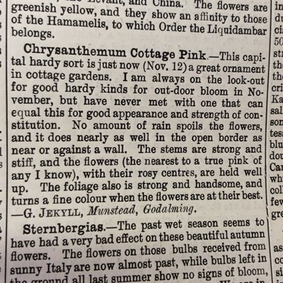 Chrysanthemum 'Emperor of China' / (C.'Cottage Pink') - The Garden 1888