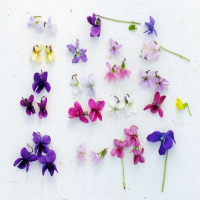 Violet flower comparison
